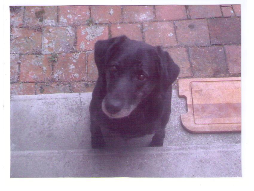 ma chienne Naya