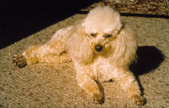 "Mon chien ''Quatrain de Birthday"""