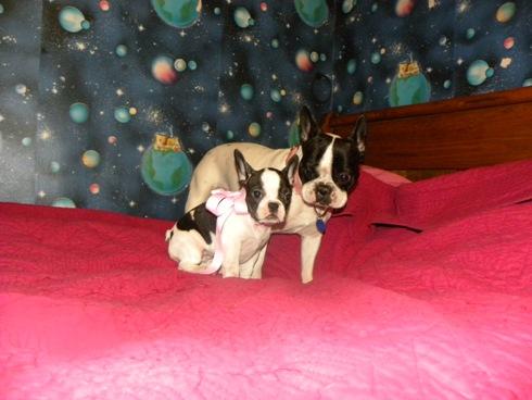 Emma et Volane, les deux boules de virgule