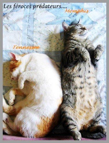 Attention aux chats ils pourraient vous griffer