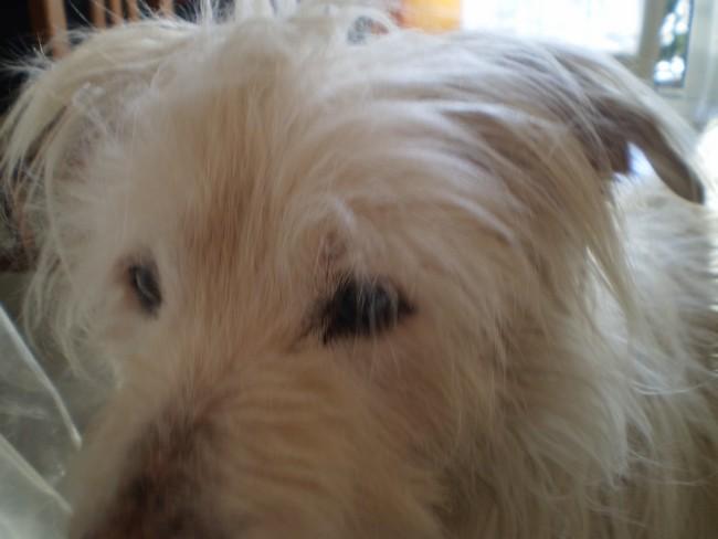 Rox mon chien,16 ans