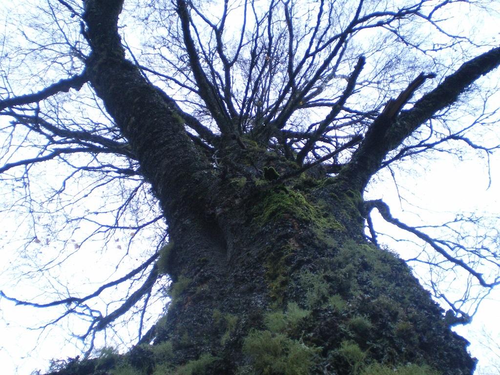 arbre pour oasis.jpg